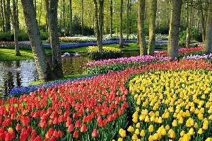 2-Парк цветов Кекенкоф в Голландии
