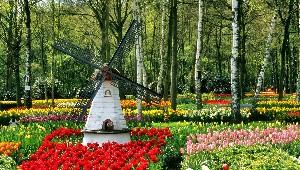 Голландский-сад.-Тюльпаны