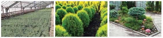 агро-флора1